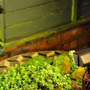 Charleston 12v Brass Floodlight in Garden