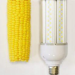 Corn Bulb vs Corn on the Cob
