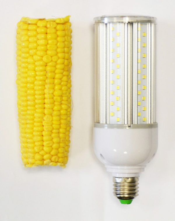 Corn Bulb vs Corn on the Cob