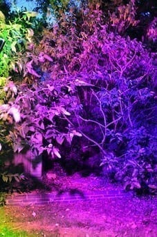 Purple floodlight