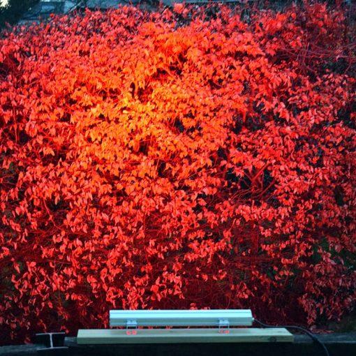 Red Wash Bush - Litecast