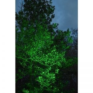 Green Colour Washed Tree - Litecast