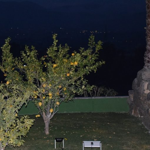Sollux Solar Uplight - Lit Lemon Tree with Solar Panel
